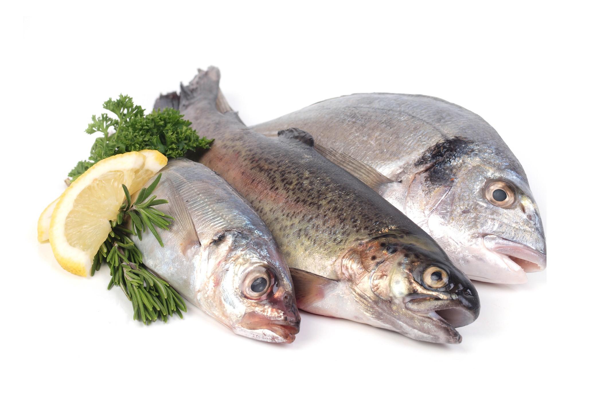Image gallery pescados for Canelones de pescado y marisco